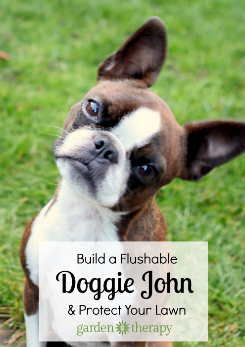 Build a Doggie John Dog Run and Save your Lawn from Damage