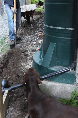 How to Build a Dog Toilet