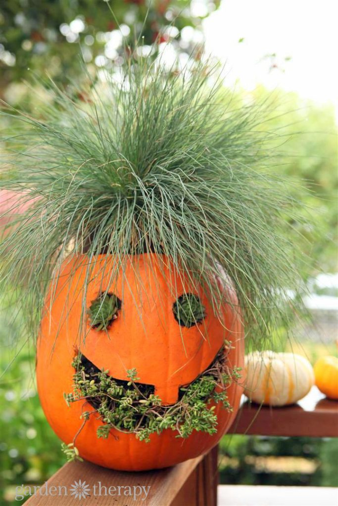 How to Make Jack-o-Planterns: a jack-o-lantern planter!