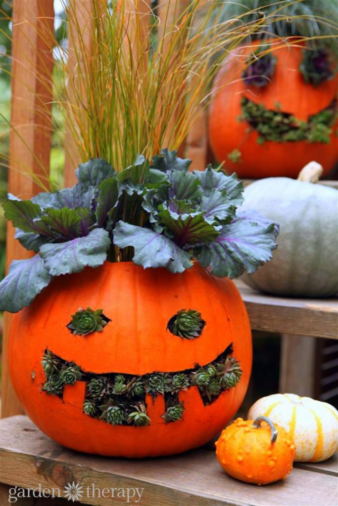 How to Make Jack-o-Planterns from pumpkins and plants