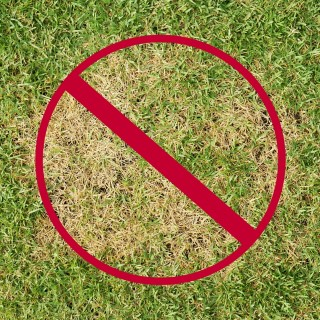 How to Prevent Dogs from killing lawn
