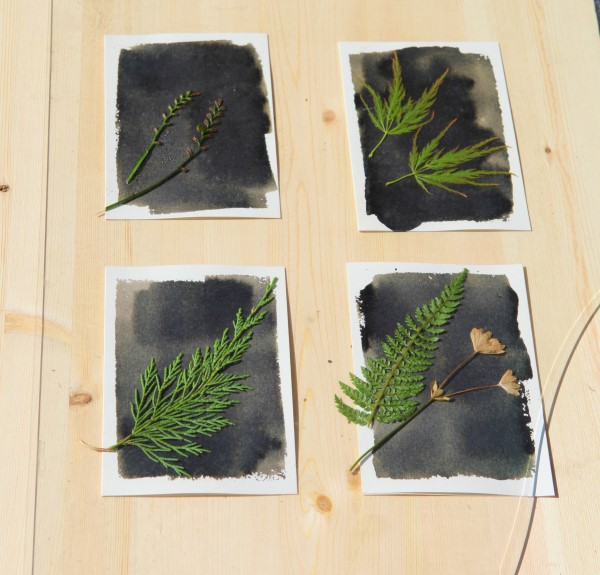 Making sun prints with leaves and pressed flowers from the garden