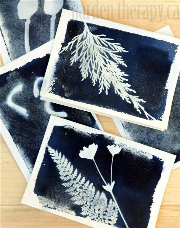 botanical prints cyanotype print cards