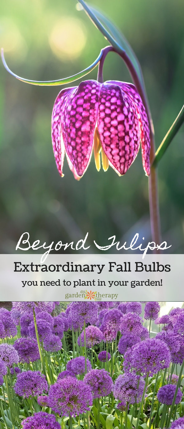 Extraordinary Fall Bulbs