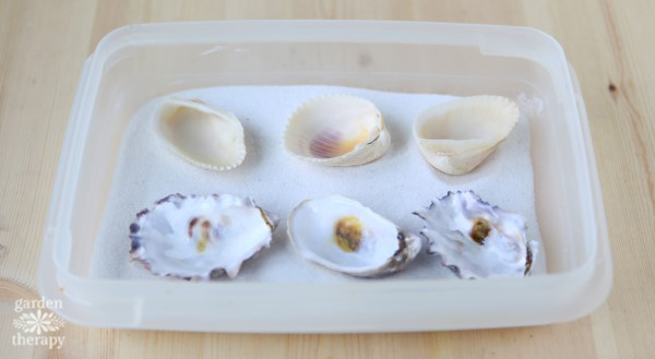 Beeswax Seashell Tea Lights