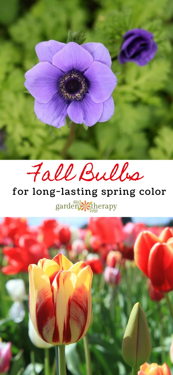 Fall Bulbs to Grow for Spring Color