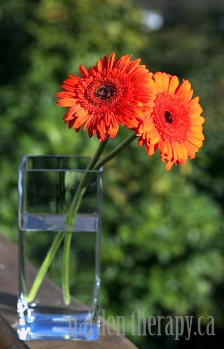 Orange Gerbera Arrangement