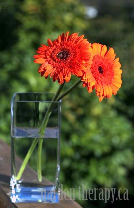 Orange Gerbera Arrangement