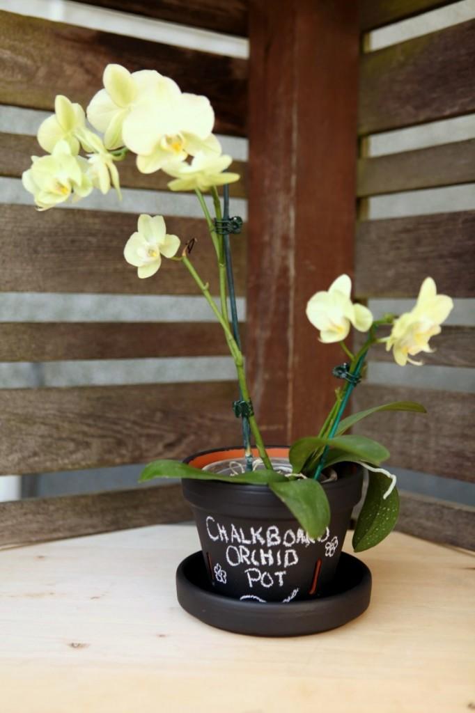 DIY Chalkboard Paint Orchid planter