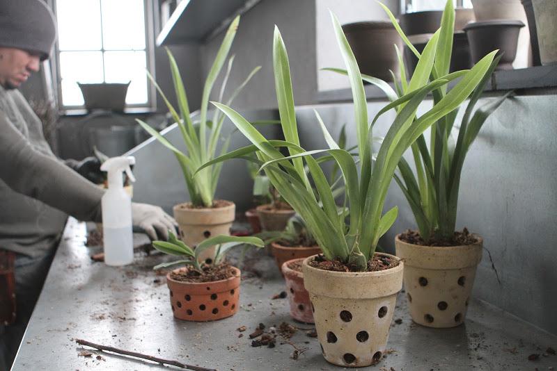 Martha Stewart Repotting Orchids