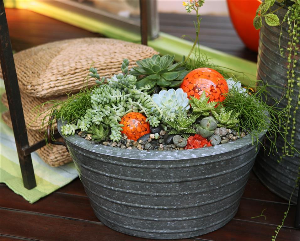 Metal Succulent Container Garden