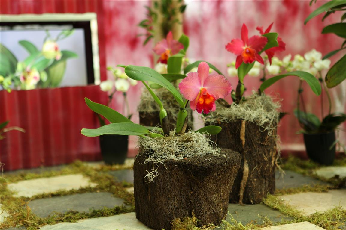 Orchids in wood blocks