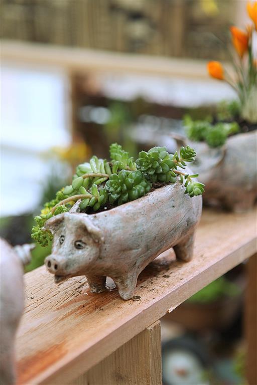Piggy Succulent Planter