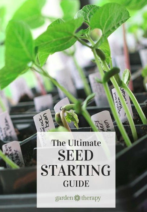 Seeds, soil recipe, light, seed-starting containers, DIY grow lights, indoor and outdoor seed starting - it's all here and more!