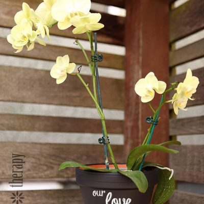 Chalkboard Painted Orchid Pot