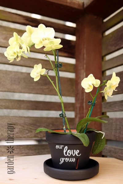 chalkboard orchid pot