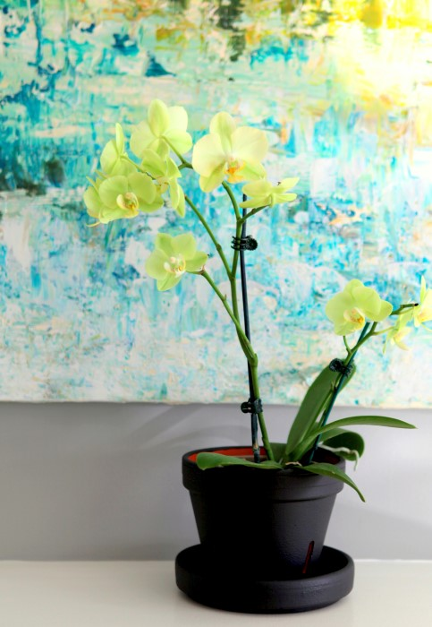 chalkboard orchid pot and instructions on how to re pot orchids so they bloom again