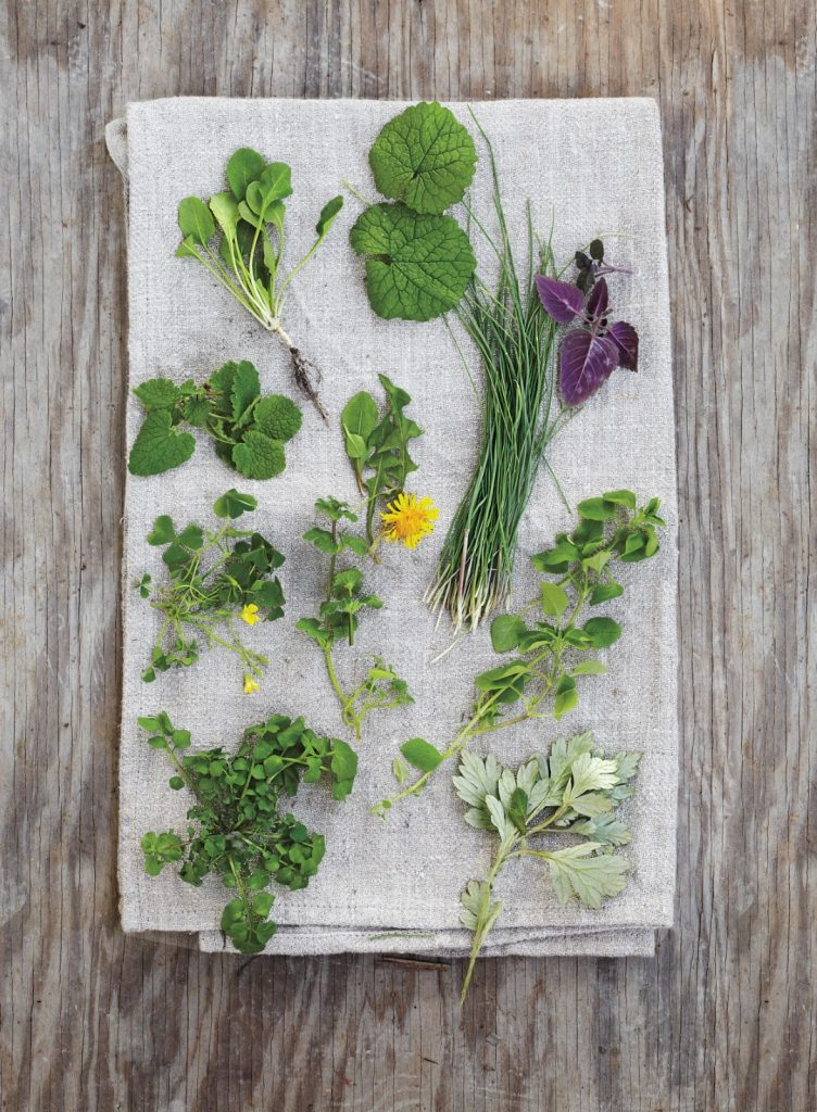 Foraging wild greens