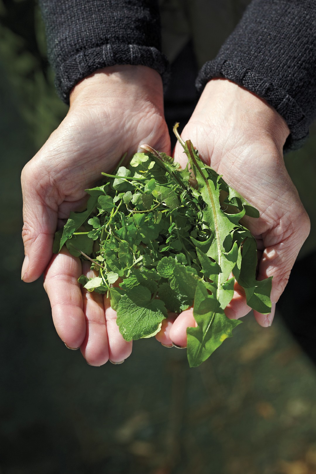 wild foraging for fresh greens