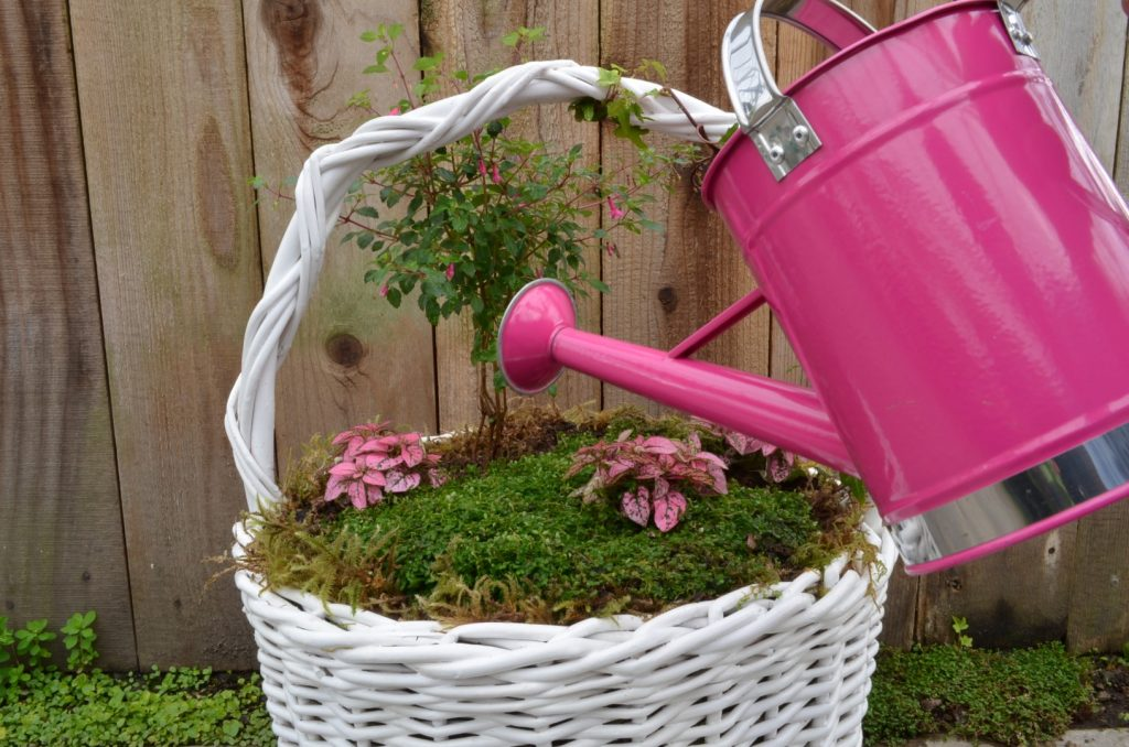 Easter basket fairy garden garden therapy babys tears and watering can negle Gallery
