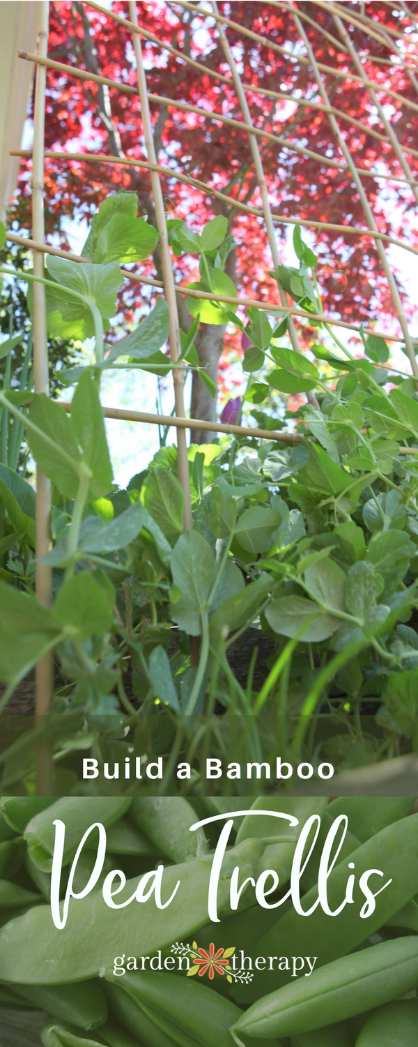 Build a bamboo pea trellis