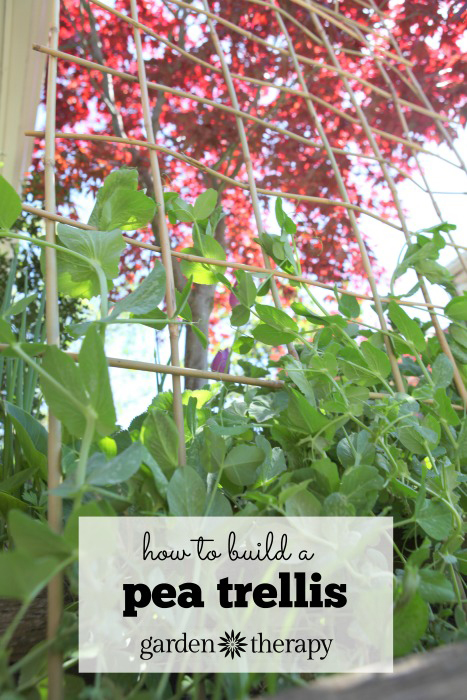 How to Make a DIY Woven Trellis with only one material!