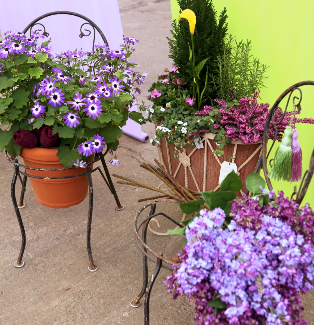 Planted Chairs In Purples