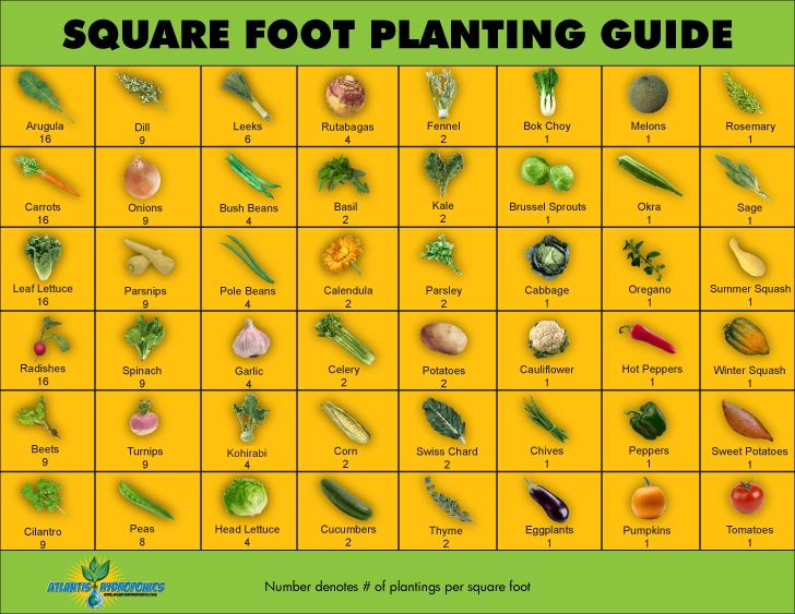 graphic regarding Printable Seed Starting Chart named Sq. Foot Planting Lead - Back garden Therapy®