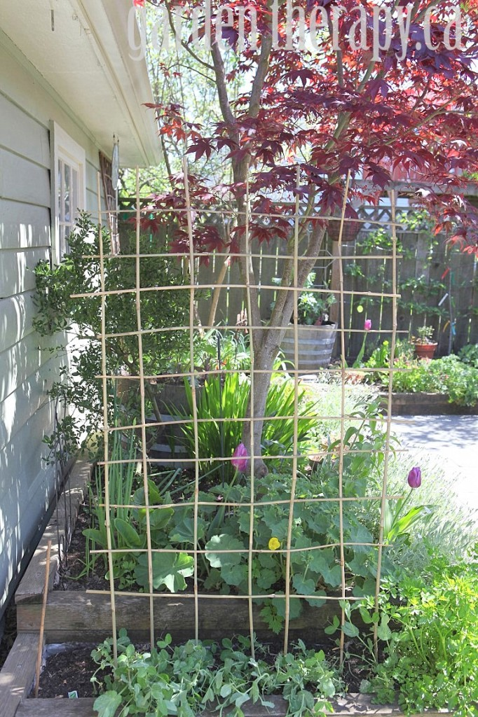 Woven Bamboo Trellis
