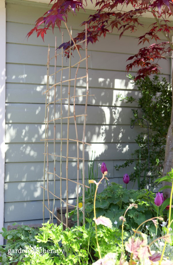 A bamboo trellis for the garden