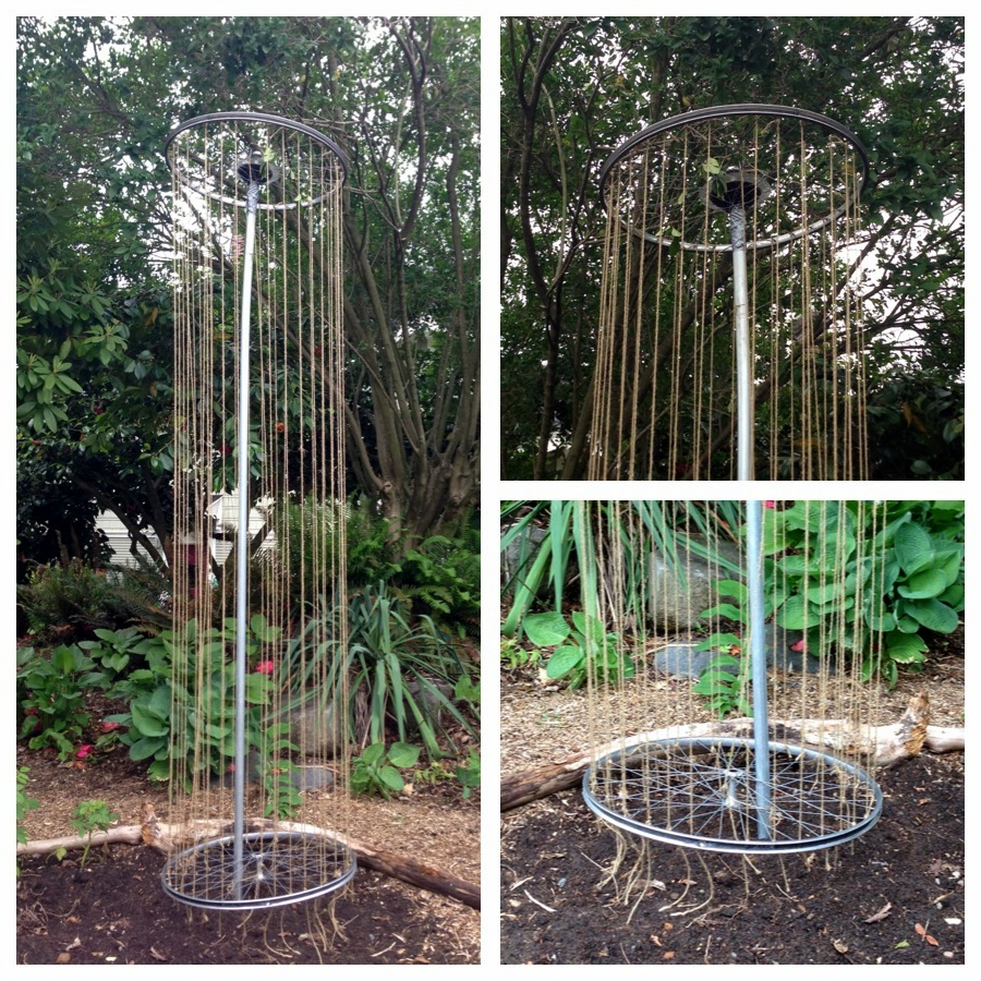 Here is a Bike Rim Trellis by Suited to the Seasons that has peas ...