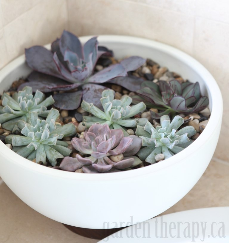 How to Make a Modern Indoor Echeveria Planter