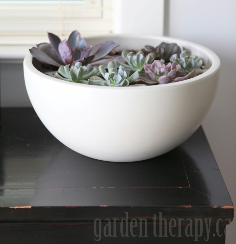 Indoor Echeveria Planter