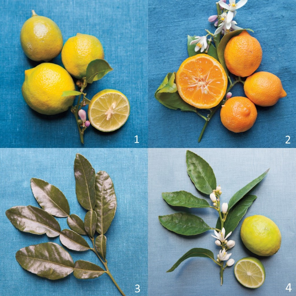 Variety of Limes photography by Katherine Wolkoff. Courtesy of Martha Stewart Living © 2013