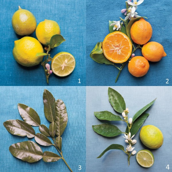 Variety Of Limes Photography By Katherine Wolkoff. Courtesy Of Martha ...