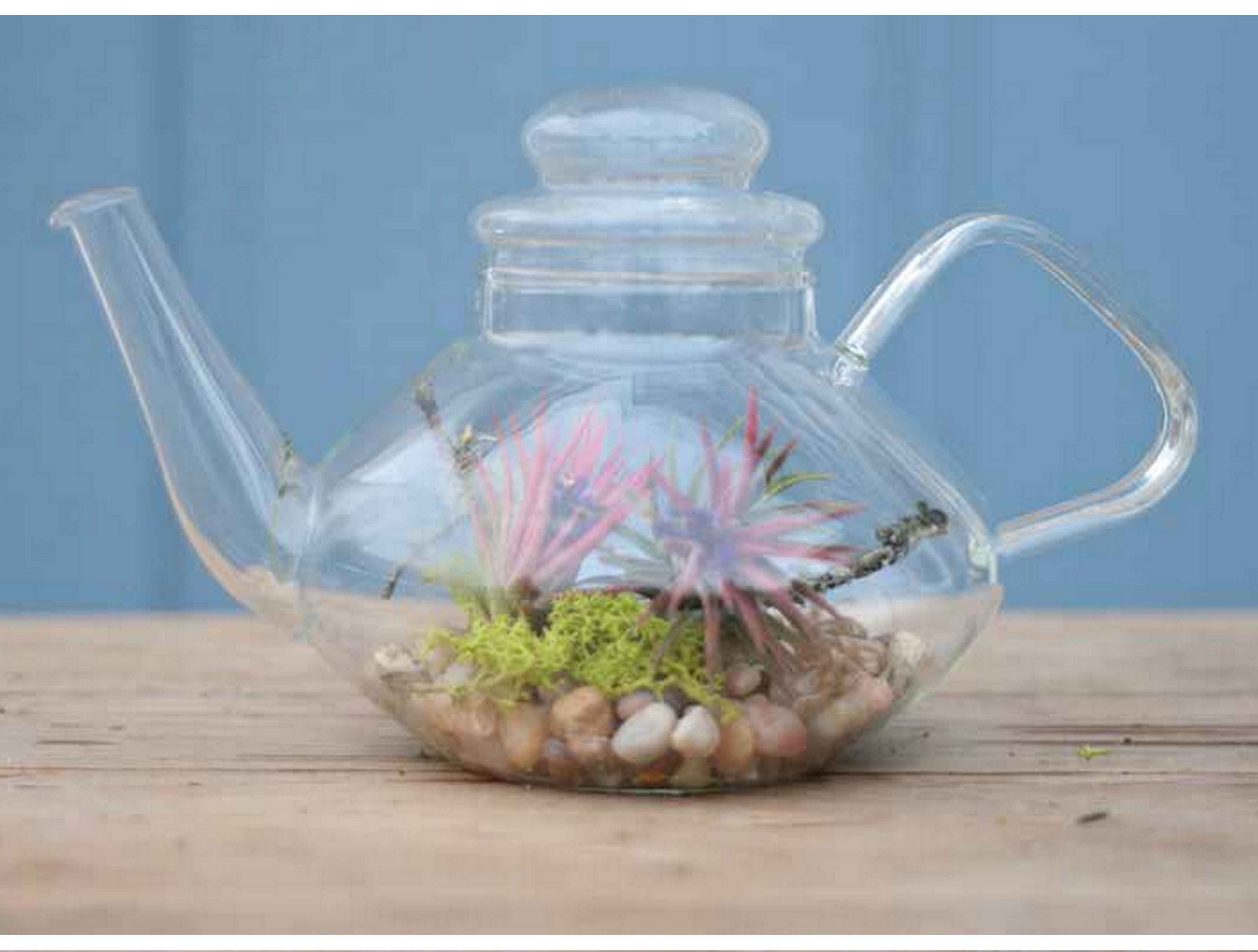 Green Tea Terrarium Square