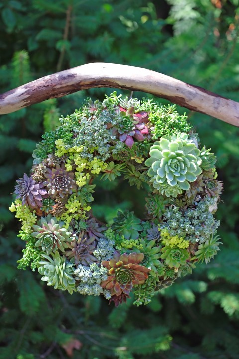 Semper Viva Wreath How To Make A Succulent Wreath