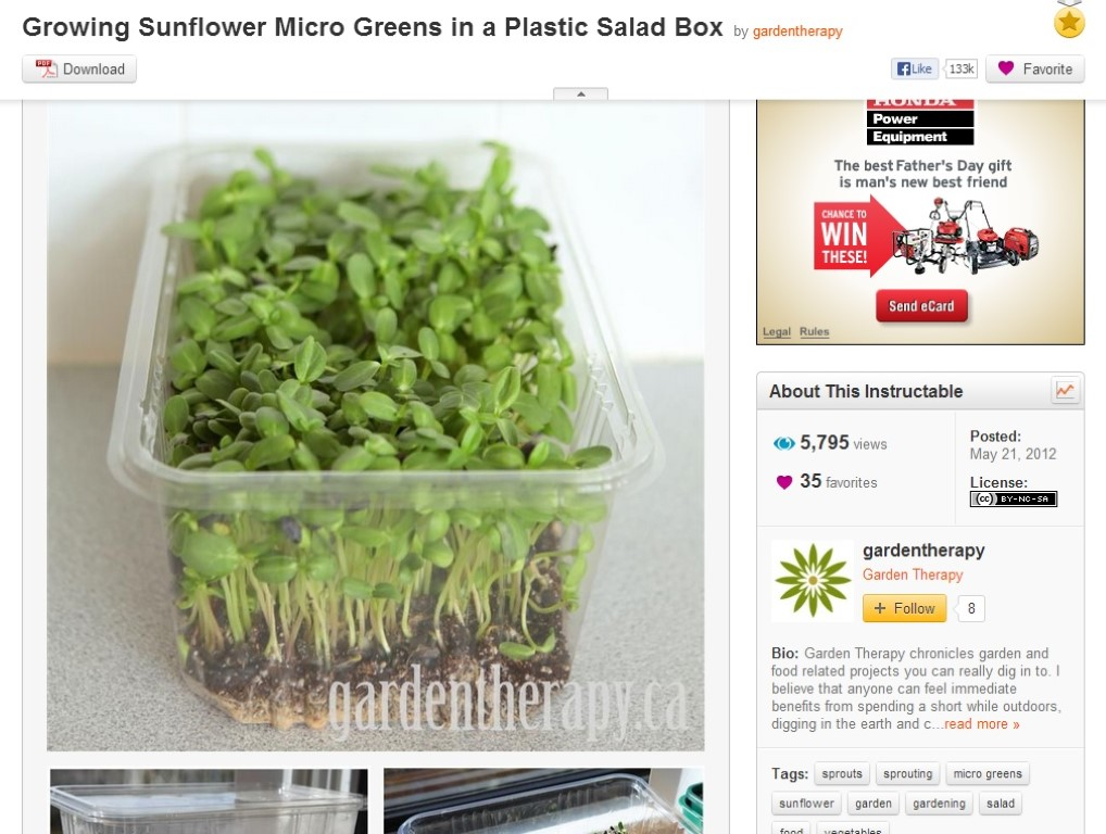 Sunflower Micro Greens On Instructables Medium