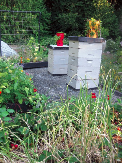 Beehives on Roof as Part of Edible Green Roof Plan & Grow up! Build an Edible Rooftop Garden - Garden Therapy