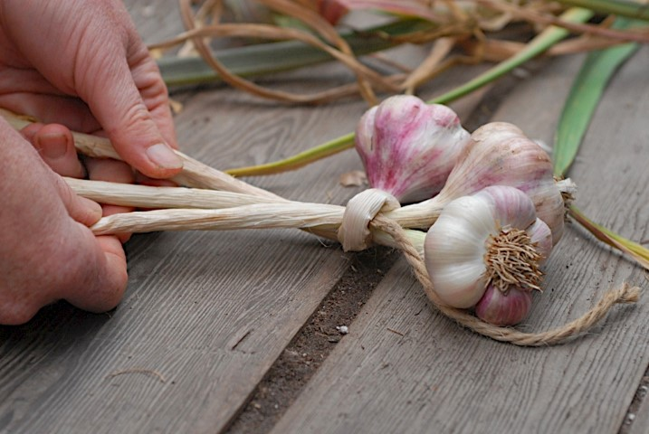 Braiding Garlic Step 1