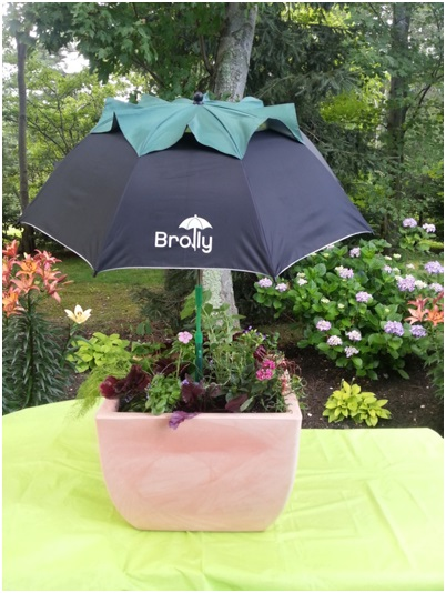 Brolly Protects Your Container Garden
