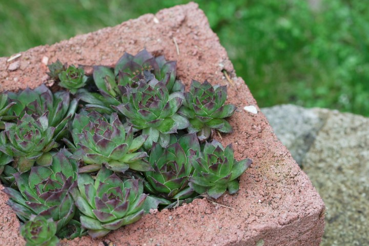 DIY Hypertufa Planter Instructions