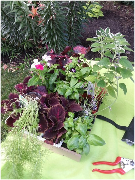 Designing an Ornamental and Edible Container Garden