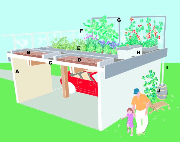 Green Roof Design Plan
