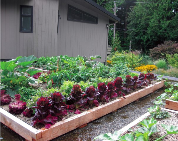 How To Build A Vegetable Garden On A Green Roof