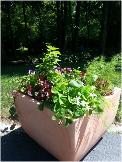 Ornamental Edible Container Garden