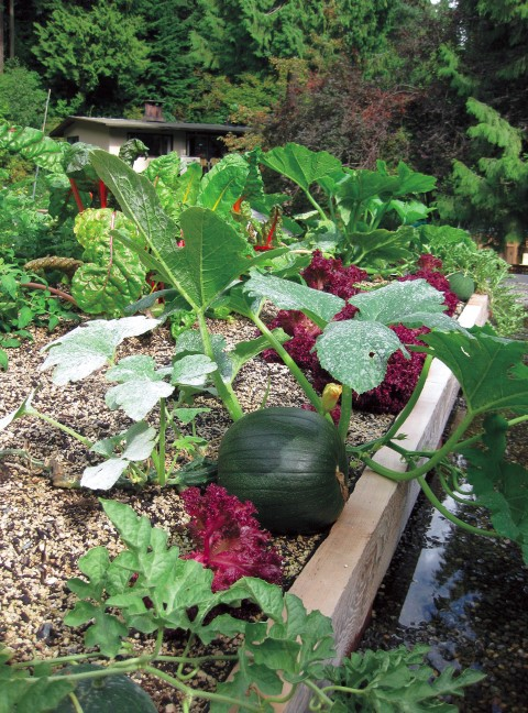 Vegetable Garden on a Green Roof
