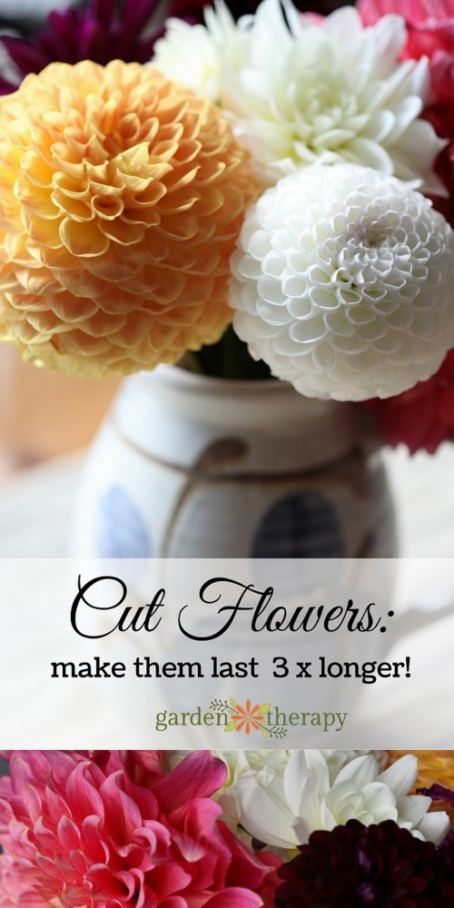 How to make cut flowers last longer.