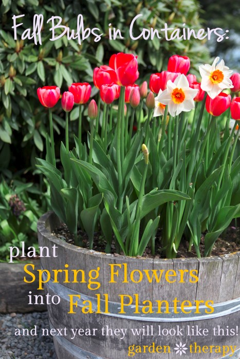 Plant Spring Flowers in your Fall Planters so next spring they look like this!