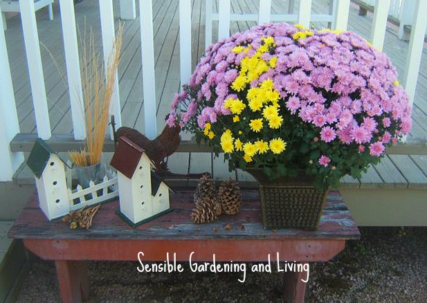 fall decor sensible gardening